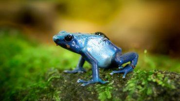 Rainforests Animals