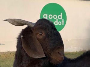 GoodDot Plant-based Meat