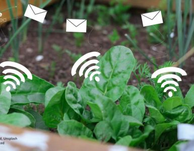 spinach emails